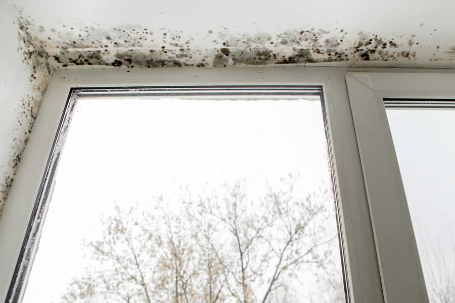 Windows Ann Arbor MI